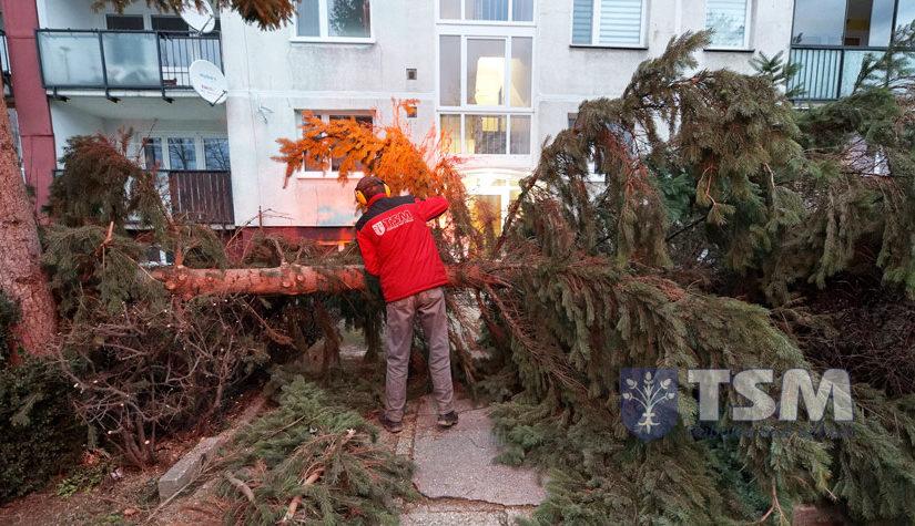 Veterná smršť vyvracala stromy v meste